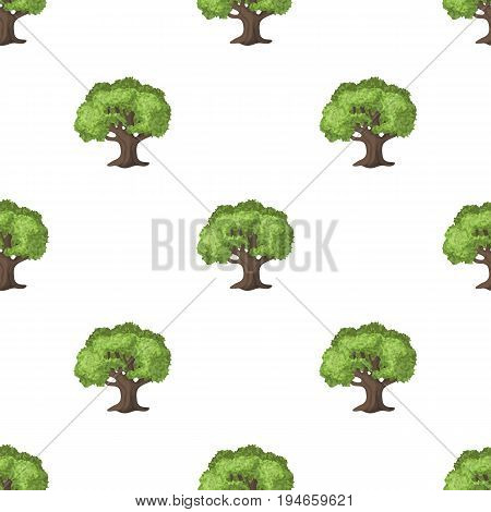 Olive Tree.Olives single icon in cartoon style vector symbol stock illustration .