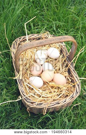 Closeup elevated view of eggs in basket on grass