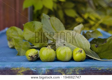 Bunch of green unripe apples laid on the table top outdoor