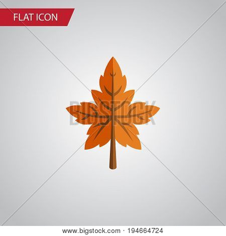 Isolated Aspen Flat Icon. Alder Vector Element Can Be Used For Aspen, Alder, Leaf Design Concept.