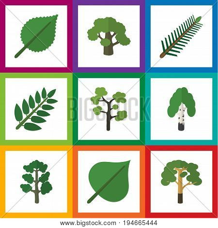 Flat Icon Ecology Set Of Tree, Spruce Leaves, Linden And Other Vector Objects. Also Includes Evergreen, Forest, Spruce Elements.