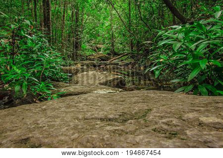 Rocks Way Into A Forest In Pirenopolis