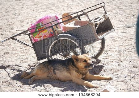 Dog and Cart at Andes mountain silver mining town - Chile