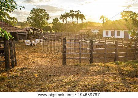 Corral. Brazilian Farm In Pirenopolis
