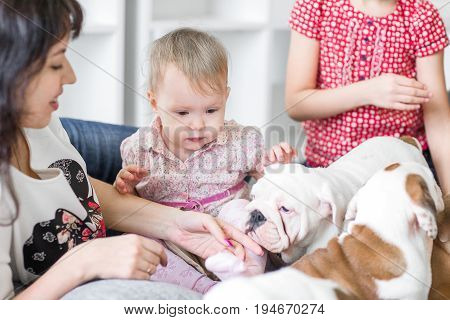 A young mother with a daughter and a puppies English bulldog.
