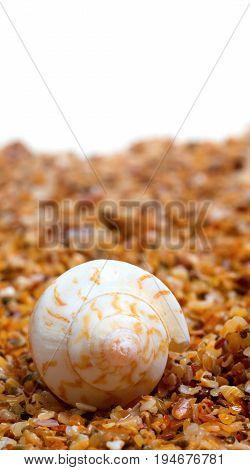 Sunlight Seashell On Sand