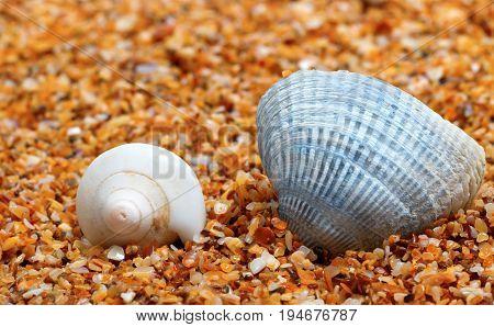 Two Seashell On Sand