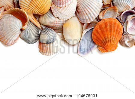 Natural Background Of Variety Seashells