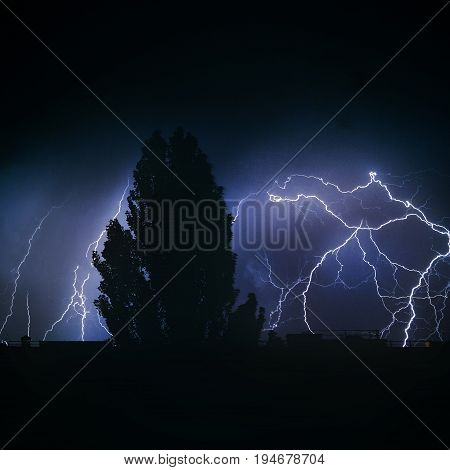 Thunderstorm night lightning in the night sky poplar lightning in the night sky tree in a thunderstorm night in the city