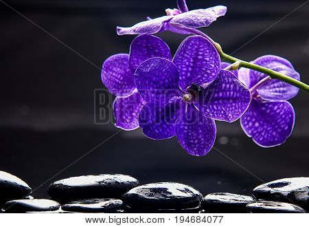 Still life with purple orchid and black pebbles