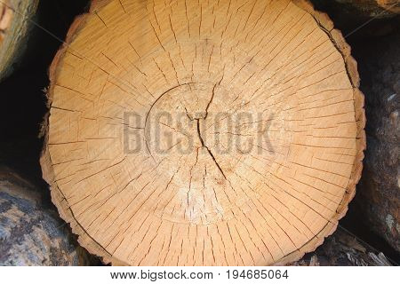 wood surface texture circle lumber side rings rough edge