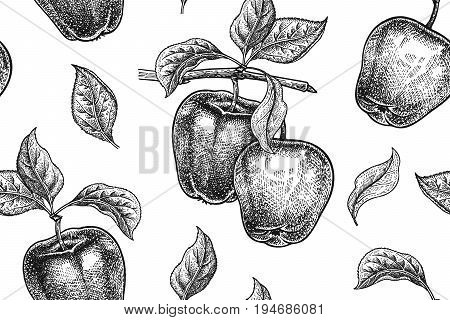 Seamless pattern. Realistic fruit branch and apple tree leaf. Black and white vegetarian food. Vector illustration art. Vintage engraving. Hand drawing. Template with nature motifs for kitchen design