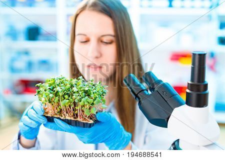 Research of photosynthesis of green plants. Food quality control of agricultural plans