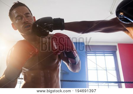 Boxers practicing boxing at fitness studio