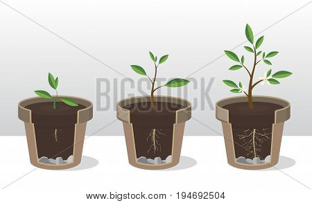 Vector illustration set of gardening elements. Seedling. Phases of growth of a plant with the roots and shoots. Rooted Sprout in flowerpot. Concept of growth and be handled with care