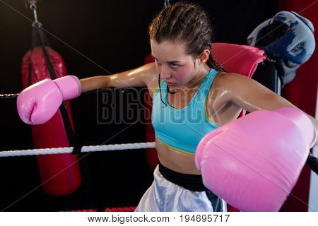 Young female boxer sitting in corner of boxing ring at fitness studio