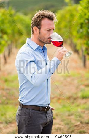 Young man drinking red wine while standing at vineyard