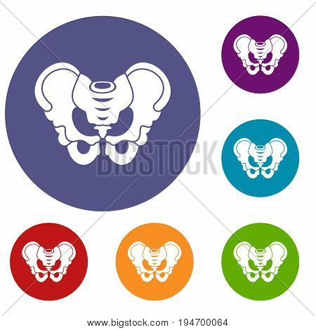 Pelvis icons set in flat circle reb, blue and green color for web