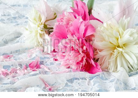 Light pink double Peonies lay on lace