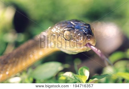 Brown snake close-up