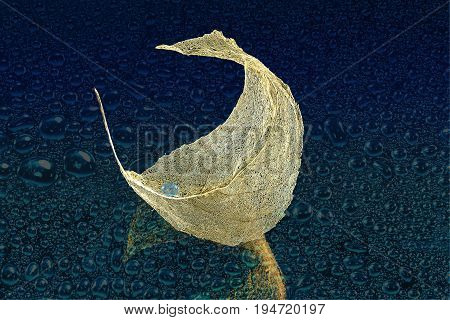 Golden skeleton leaf with water drop on the wet surface close up. Beautiful autumn background or design concept of moisturizing in cosmetology