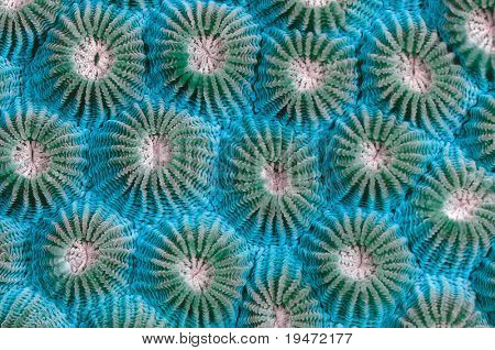 High resolution close up abstract image of a virus concept