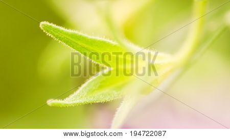 Soft Focus Flower Start To Bloom, Abstract Green Nature Beginning Of Life Background