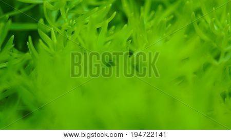 Green Winter Plant Macro Soft Focus, Abstract Nature Background With Copy Space