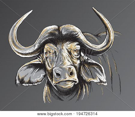 Three tone vector line drawing of a Buffalo's face