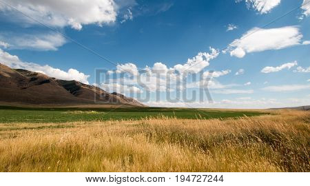 Alfalfa Hayfield And Wheat Field Under Cumulus Clouds In Wyoming Usa