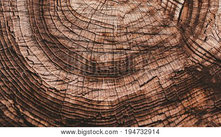 Brown Natural Wood texture background with wooden annual rings