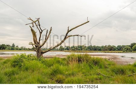 Dead tree with bare branches in a Dutch marshy area on a cloudy day in the spring season.