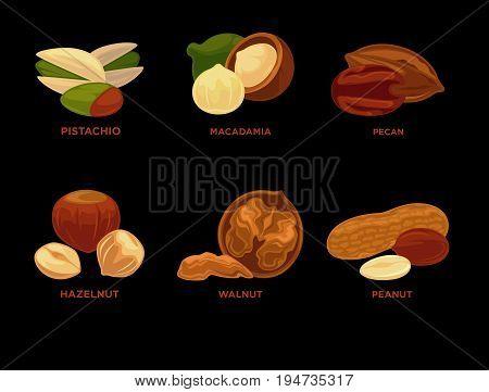 Highly detailed nut icons: nutmeg, almond peanut, pastachio, walnut, hazelnut, cashew, brazil nut, pecan. Vector Illustration.