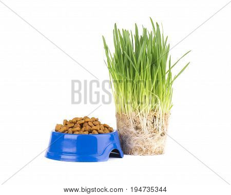 Dry cat food in a blue bowl. Fresh green grass for cats. Isolated on white background