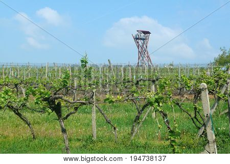 View of a farm winery on spring with a lookout tower on the hill of the Slunecna, Velke Pavlovice wine region, Czech Republic
