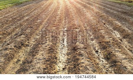Furrows row pattern of plowed agricultural fields prepared for planting crops with sun light