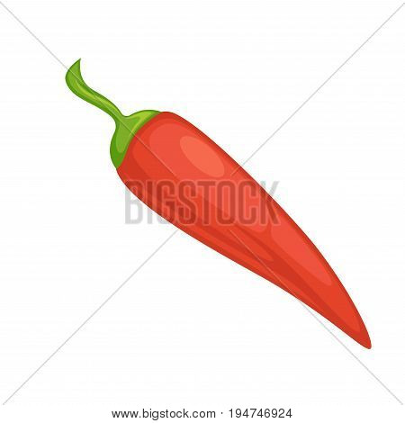 Red chili pepper or spicy jalapeno vegetable. Vector flat isolated icon for culinary salad spice or vegetarian cooking condiment