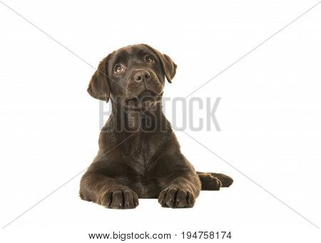 4 months old brown labrador retriever puppy lying down seen from the front with its paws in front of her and looking up isolated on a white background