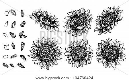 Set of Graphic sunflower and sunflower seeds, black and white