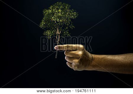 Hand of asia man pinch by finger for pick or taken a tree is environment helping giving or beg concept on black background dark style