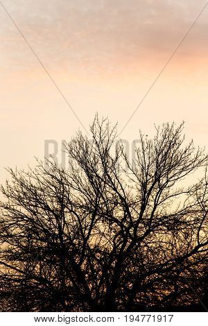 bare branches of a tree at sunset