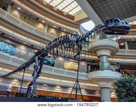 ATLANTA GA USA MARCH 6 2014 - Dinosaur skeleton inside Atlanta International Airport on March 6 2014 in Atlanta GA USA.
