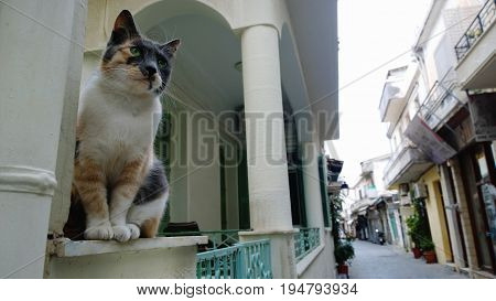 A stray cat with a beautiful white-red-gray color. The cat (as a statue) sitting on the dais and inspects the deserted street of the old town of Rethymno