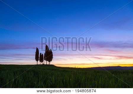 Summer in the fields of Tuscany in the sunrise-Italy
