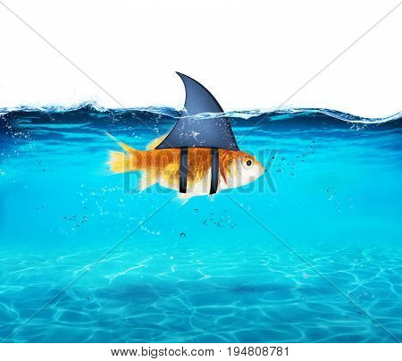 Goldfish disguised as shark in the sea to terrorize the enemies. Concept of competition and bravery