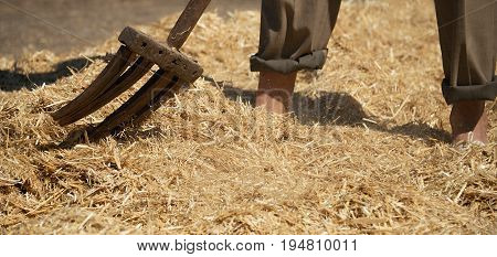 Farmer turns the hay with a hay old fork