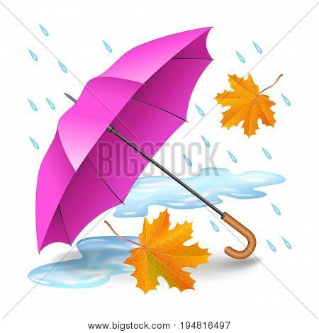 Pink or purple realistic umbrella with falling orange leaves raindrops and puddles isolated on white background. Rainy autumn day. Vector illustration