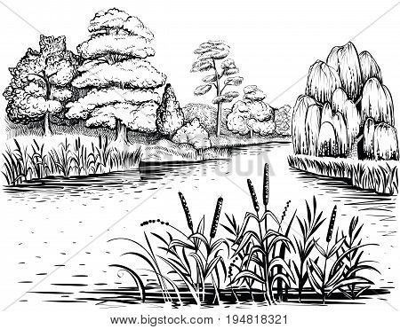 River landscape with trees and water plants, vector illustration. Riverside with forest, reed and cattail. Freehand drawing.