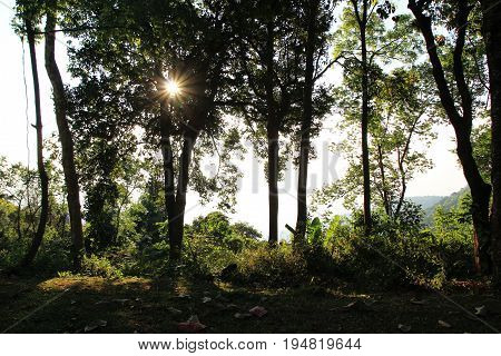 Travel To Doi Suthep National Park, Chiang Mai, Thailand. The Autumn Landscape In A Forest With Shad