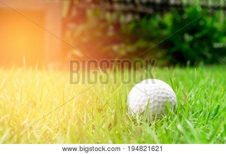 beauty golfball on the green grass, sport
